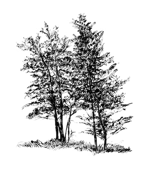 Zeichnung der bäume hand zeichnen