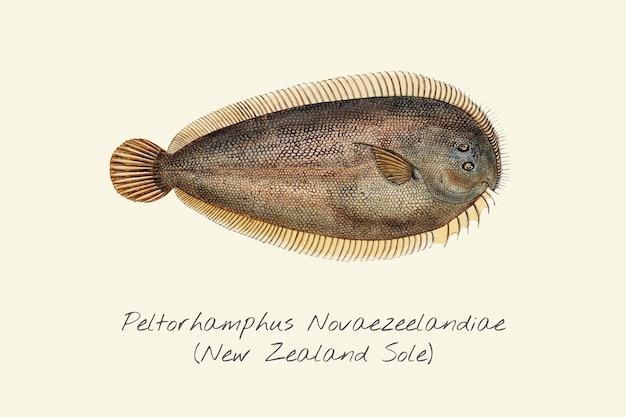 Zeichnung eines neuseeland-verkaufs