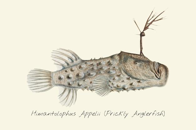 Zeichnung eines stacheligen anglerfisches