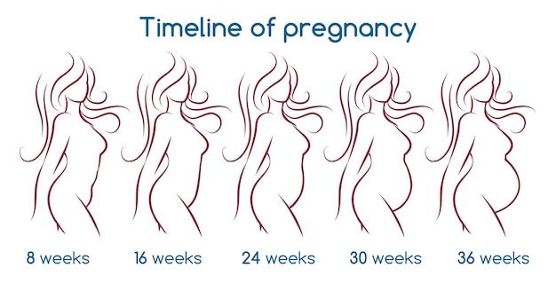 Zeitleiste der schwangerschaft