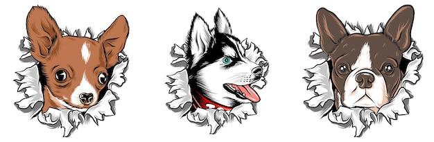 Zerrissener papierhund
