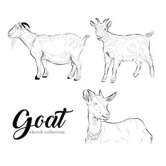 Ziege tier von qurban-vektor-illustration-set