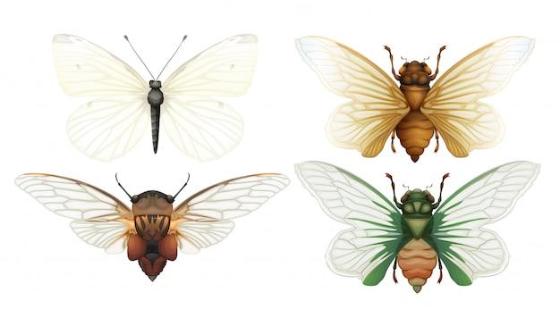 Zikaden-insekten-vektor auf weißem hintergrund