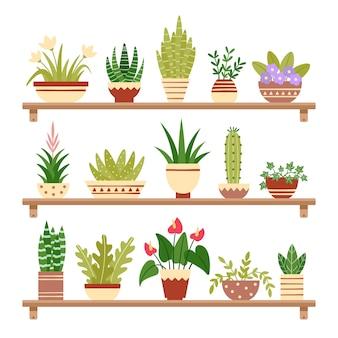 Zimmerpflanzen im regal. blühen sie im topf, in der topfpflanze und in den blumentöpfen. hauptanlagen auf regalen lokalisierten illustration
