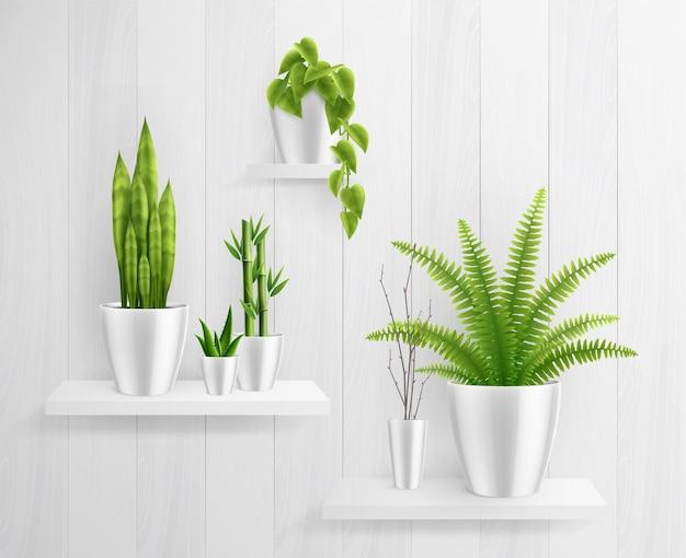 Zimmerpflanzen im topf auf regalen realistische illustration