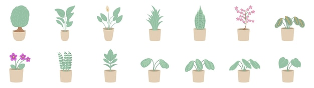 Zimmerpflanzen in einem topf. zimmerpflanzen lokalisiert auf weißem hintergrund.
