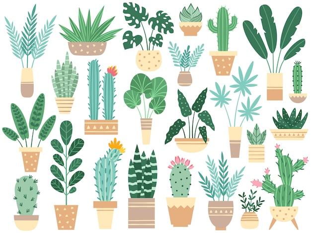 Zimmerpflanzen in töpfen. natur houseplants, dekoration eingemachter houseplant und blumenanlage, die im topf lokalisiert pflanzt