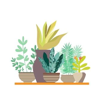 Zimmerpflanzen in töpfen