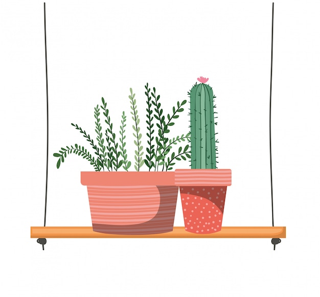 Zimmerpflanzen mit topf auf regal