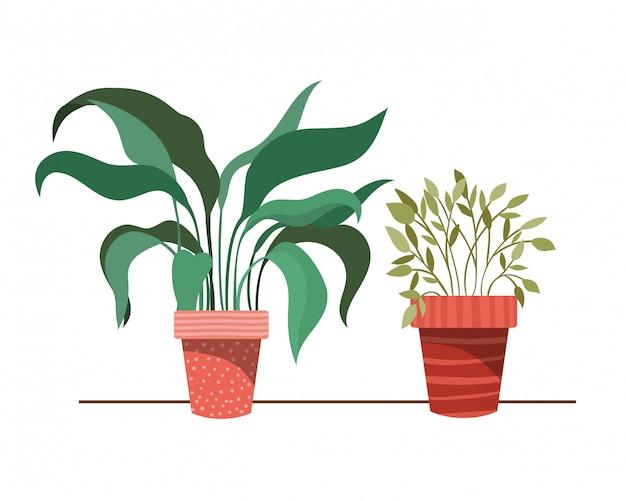 Zimmerpflanzen mit topf
