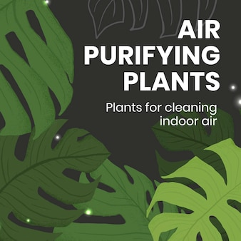 Zimmerpflanzen-social-media-vorlagenvektor mit luftreinigendem pflanzentext