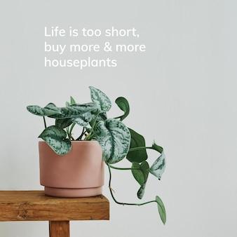 Zimmerpflanzen-zitat-vorlagenvektor, das leben ist kurz, kaufen sie immer mehr zimmerpflanzenplant