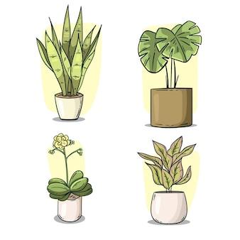 Zimmerpflanzensammlung