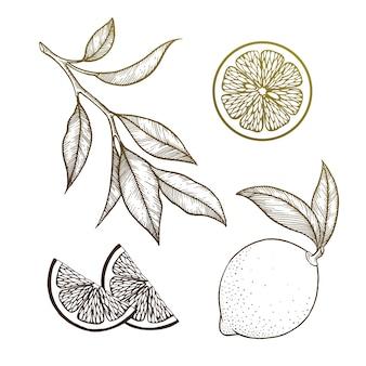 Zitrone eingestellt auf weiß