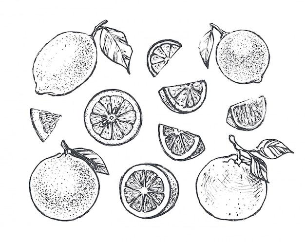 Zitronen-, orangen- und kalkhand gezeichnet