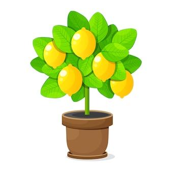 Zitronenbaum im tongefäß auf weißem hintergrund