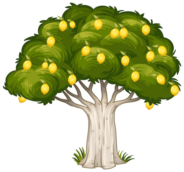 Zitronenbaum isoliert auf weißem hintergrund