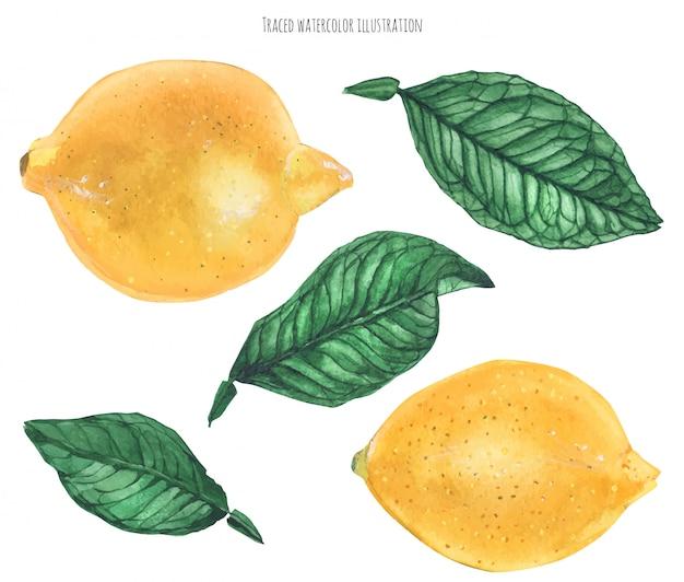 Zitronenfrüchte und blätter