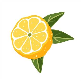 Zitronenhälfte mit blättern auf weißem hintergrund. vektor-illustration
