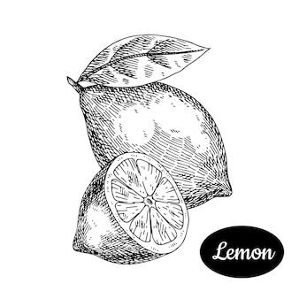 Zitronenhand gezeichnet.