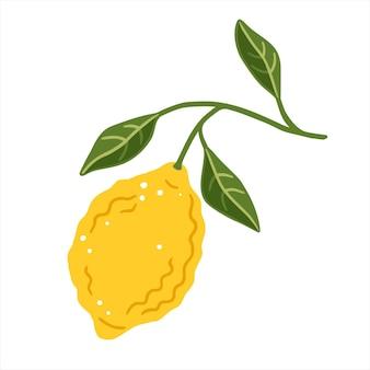 Zitronenscheibe mit blättern auf weißem hintergrund. vektor-illustration