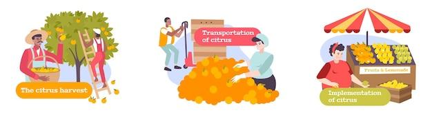 Zitrusflachkompositionen mit personen, die an der ernte des transports und der umsetzung von früchten beteiligt sind