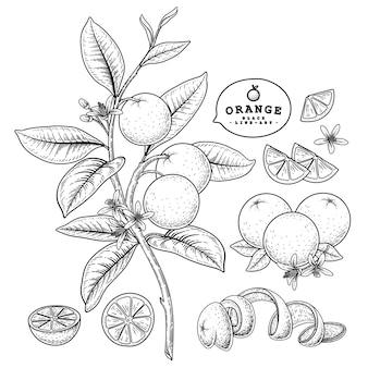 Zitrusfrucht orange dekoratives set isoliert auf weiß