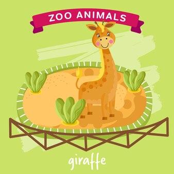 Zootier, giraffe