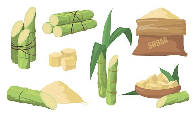 Zuckerrohr und zuckerset. packung mit grünen stielen, pflanzen mit blättern, sack mit braunem zucker auf weißem hintergrund. illustrationssammlung für landwirtschaft, rum, schnapsproduktionskonzept.