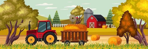 Zuckerrohranbau zur sonnenuntergangszeit