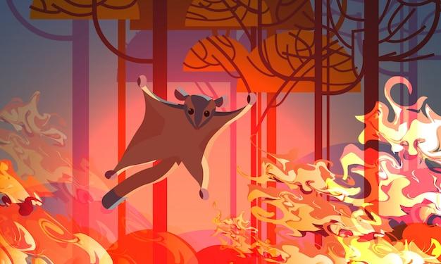 Zuckersegelflugzeug, das von den bränden in australien-tieren sterben in den intensiven orange horizontalen flammen des waldbrand-naturkatastrophenkonzeptes entgeht