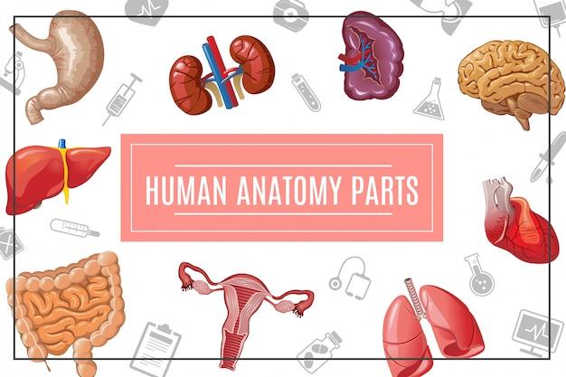 Zusammensetzung der menschlichen körperorgane der karikatur mit leber, nieren, lungen, gehirn, herz, magen, darm, weiblichem fortpflanzungssystem und medizinischen ikonen