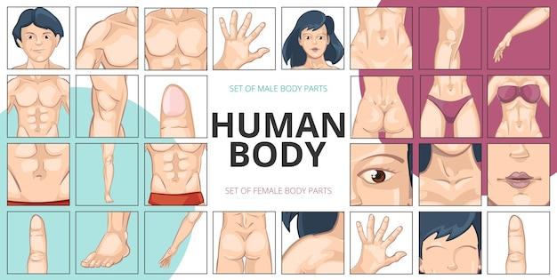 Zusammensetzung der menschlichen körperteile