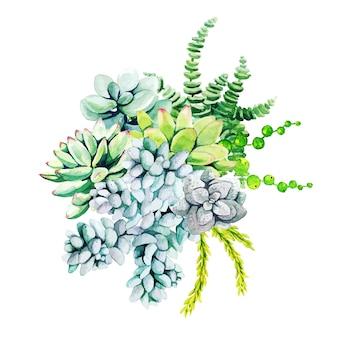 Zusammensetzung von aquarellkaktuspflanzen und sukkulenten