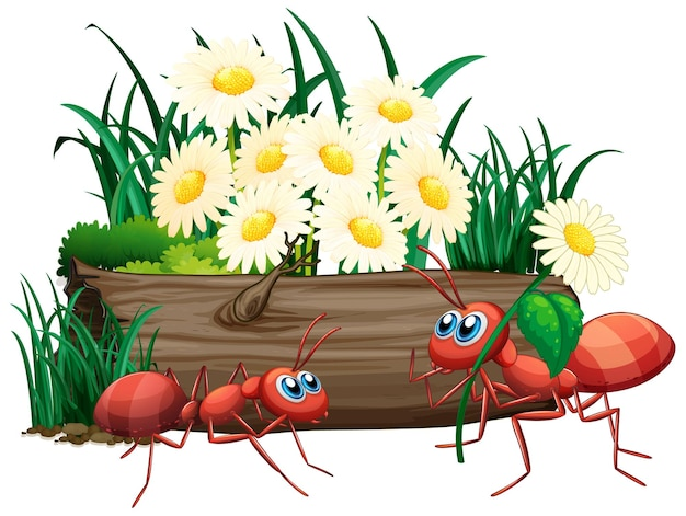 Zwei ameisen in der natur
