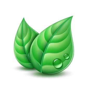 Zwei grüne blätter. ökologiekonzeptikone mit grünen blättern.