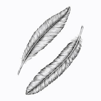 Zwei handgezeichnete federn vektor