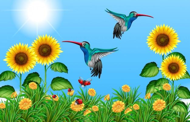 Zwei kolibris, die in sonnenblumenfeld fliegen