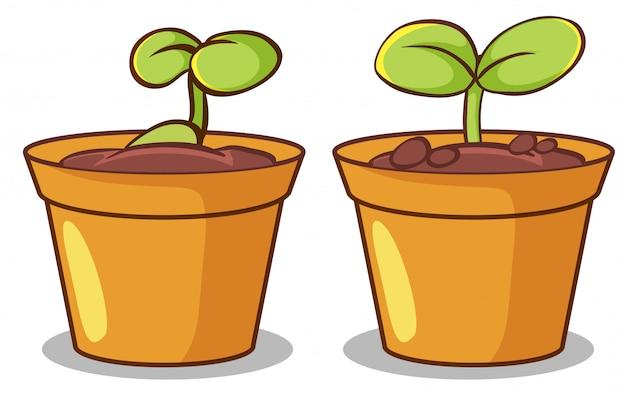Zwei töpfe mit pflanzen