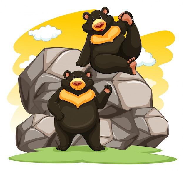 Zwei verspielte bären
