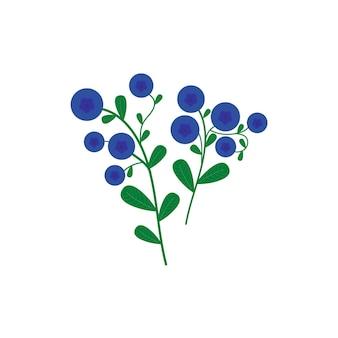 Zweig der blaubeeren vektorgrafiken
