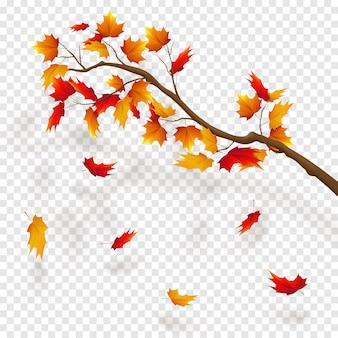 Zweig des ahornbaums, herbstlaub fallen. herbst realistische vektorillustration auf transparenzhintergrund.