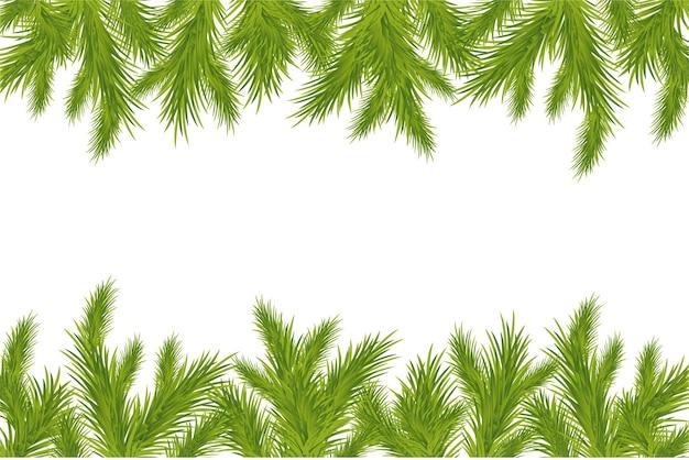 Zweig des weihnachtsbaumes isoliert