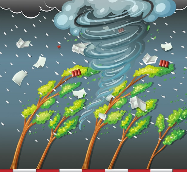 Zyklon traf den baum