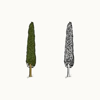 Zypressenbaum im weinlesestil das nationale symbol von griechenland hand gezeichnet