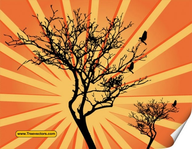 155 vector árvore sunburst