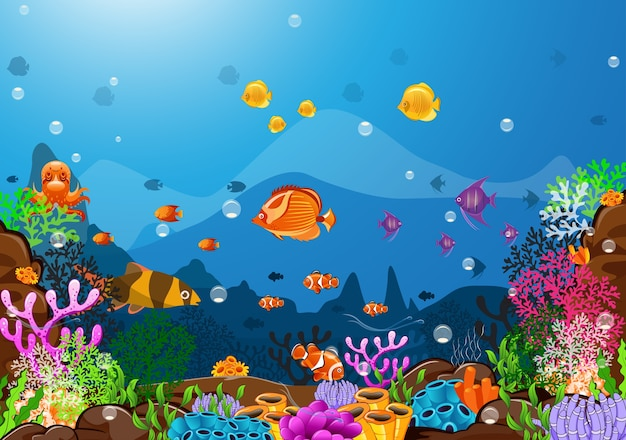 A beleza da vida sob o mar