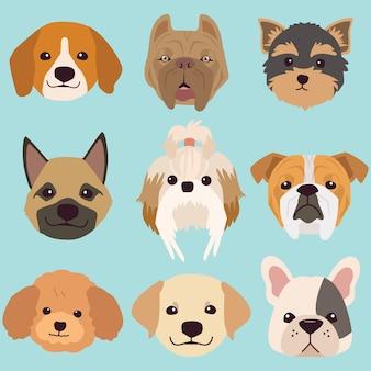 A cara de coleção de cachorro