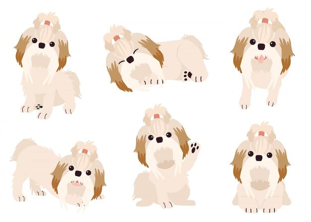A coleção de cão shihtzu em muitas ações com estilo vetor plana. recurso gráfico sobre conjunto de cães boston terrier