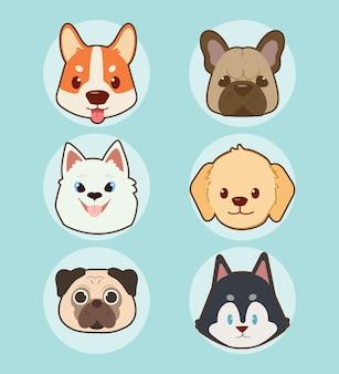 A coleção de conjunto de cachorro rosto bonito.